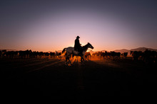 Silhouette Of Horse At Sunset