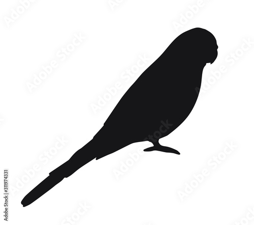Fotografia Vector black budgie parrot silhouette isolated on white background
