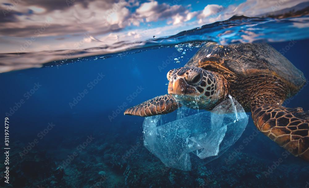 Fototapeta Underwater animal a turtle eating plastic bag, Water Environmental Pollution Problem