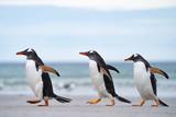 ペンギン サウンダース島 - 311978918