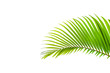 canvas print picture - Beautiful green coconut leaf isolated on white background with clipping path for design elements, tropical leaf, summer background