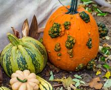 Lumpy Pumpkins