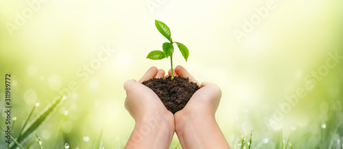 Fototapeta Hands holding young green plant on green nature background.
