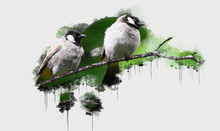 Two Black And White Birds Perc...