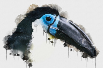 Close up photo of hornbill exotic bird. Beautiful Digital watercolour painting of Bird. Isolated painting of Exotic Birds. Endangered Animal Abstract Paintings Wallpaper. Acrylic Painting
