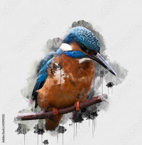 Blue and brown bird perched on a tree branch Wallpaper Mural