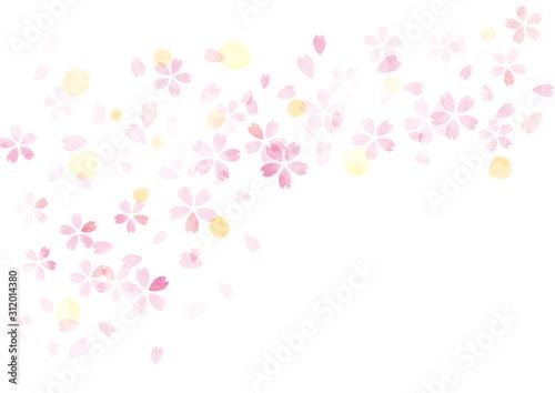 桜 水彩 テクスチャ 背景 ピンク - 312014380