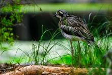 Animals And Birds In Queensland Australia