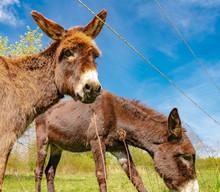 Wildlife, Donkey, Germany - Tw...