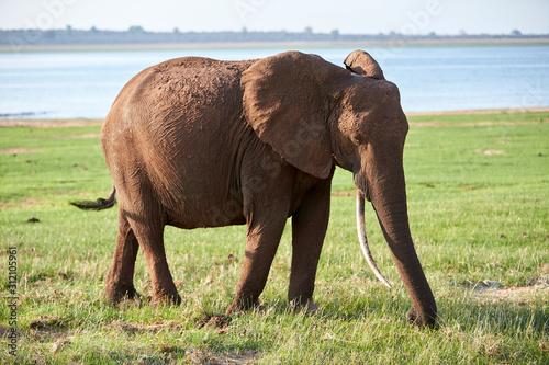 Photo Elephant at Lake Kariba, Zimbabwe
