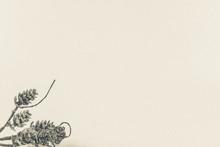 Branche De Sapin Avec Des Pommes De Pin Argentées Couvertes De Paillettes Pour La Célébration De Noël Dans L'angle Photo Sur Fond Uni Avec Espace Texte