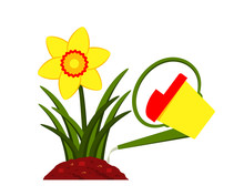 Daffodil And Watering Can