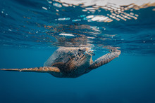 A Turtle Breathing Out Making ...