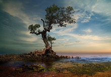 Strong Old Tree On The Beach