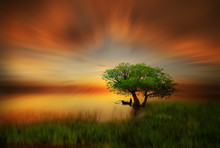 Golden Sunset On The Green Land