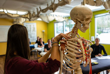 A Close Up View On The Hands Of A Tutor Giving An Anatomy Class, Using A Model Skeleton Showing The Spine And Neck, With Blurry Students In Background