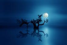 Black Tree In A Blue Night