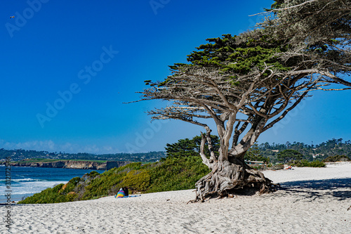 A windswept tree on am windswept beach Canvas-taulu