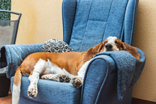 Dog Sleeping Soundly Resting O...