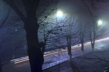 City Road Between Trees At Dusk
