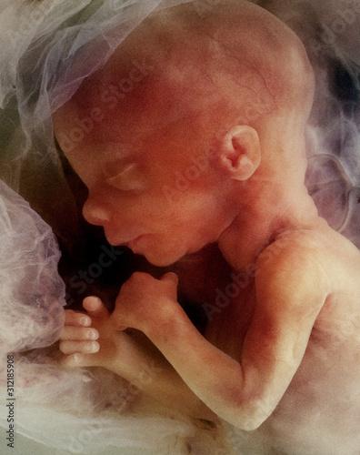In-vitro image of a human fetus Fototapet