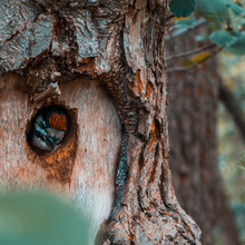 A Small Bird Peeking Out From ...