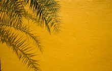 Palm Tree Leaves And Shadows Against Yellow Wall  Background