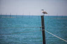 Seagull Standing On A Pole