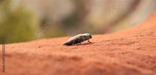 Photo Portrait insecte