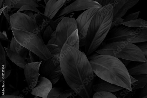 Fototapety, obrazy: black and white background