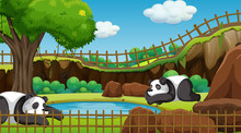 Scene With Two Pandas In The Zoo