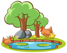 Isolated Picture Of Chicken By The Pond