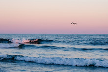 Pelican Against A Pink Sky And...