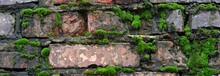 A Wet Brick Wall Overgrown Wit...