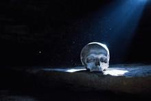 Human Skull In The Moonlight