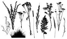 Weed, Wild Plants In Field And Forest, Set Of Silhouette. Vector Illustration