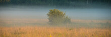 Single Tree On A Meadow In The...
