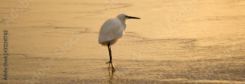 Photo An egret at sea at sunset