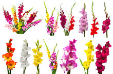 Collection Gladiolus Flowers I...