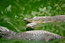 Gambia Crocodile Reserve