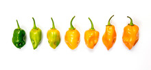 Set Of Habanero Chili Peppers ...