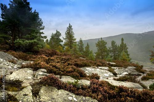 Scenic view from Craigendarroch Hill Canvas Print
