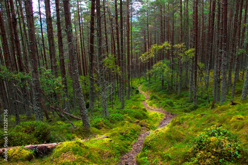 Fotografiet Forest in Aberdeenshire, Scotland, UK