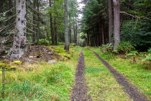 Forest in Aberdeenshire, Scotland, UK Wallpaper Mural