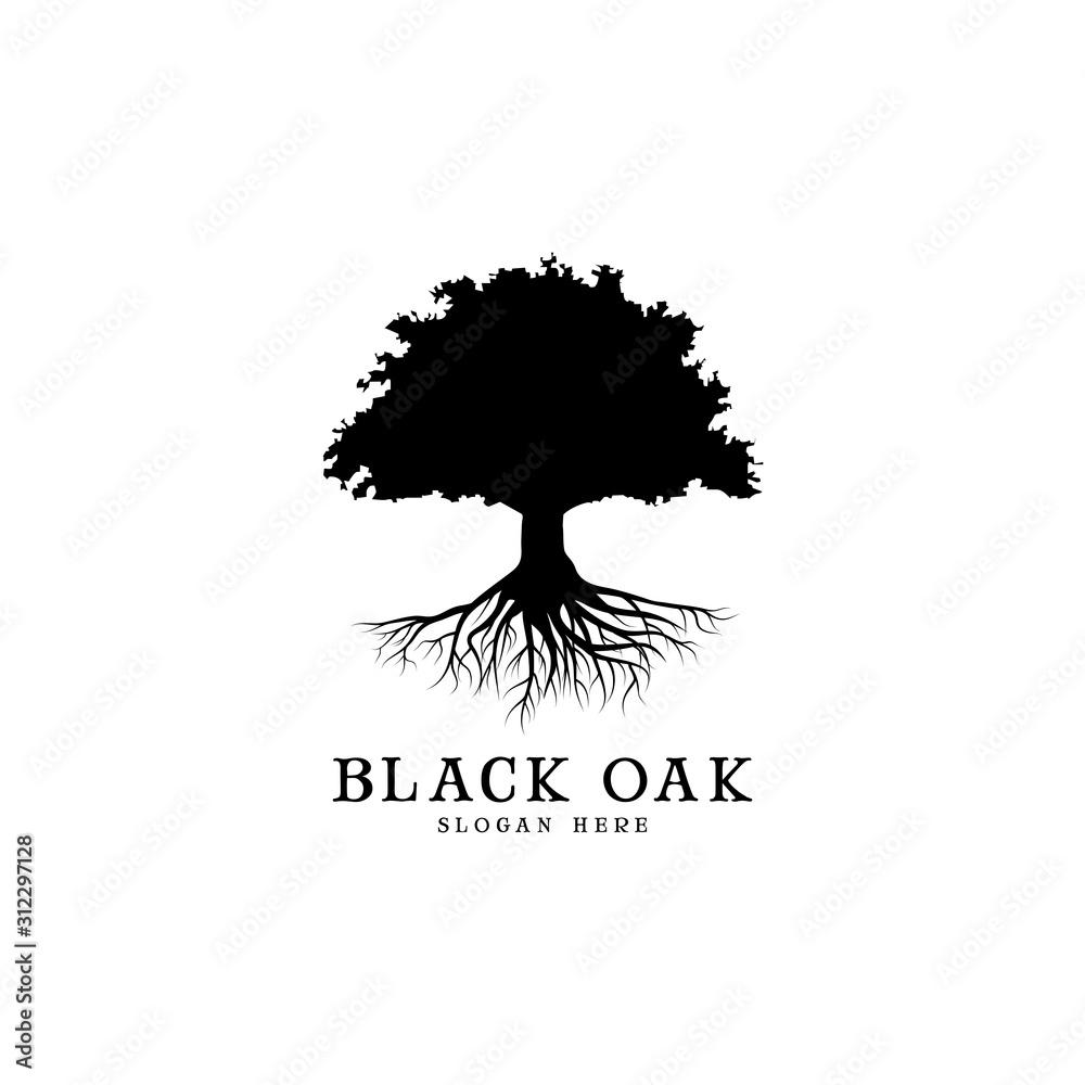 Fotografie, Obraz black oak tree logo and roots design illustration