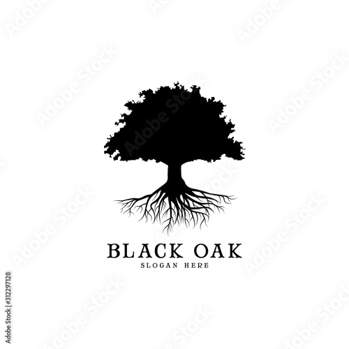 Fotografie, Obraz black oak tree logo and roots design illustration