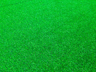 Beautiful green grass texture use as natural background for design in outdoor
