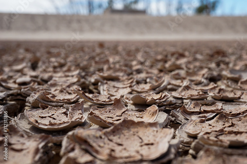 Mud chips in a dried pond