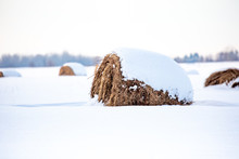 Round Hay Bales Covered With Snow In A Farm Field