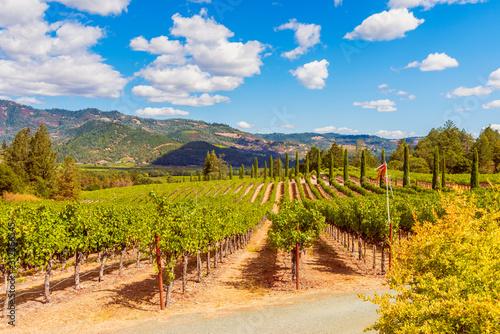 Photo Vineyards in Napa Valley California USA